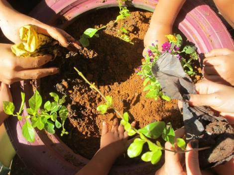 Construçao coletiva de hortas e jardins comunitários